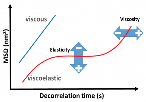 Viscoelasticity measured by DWS